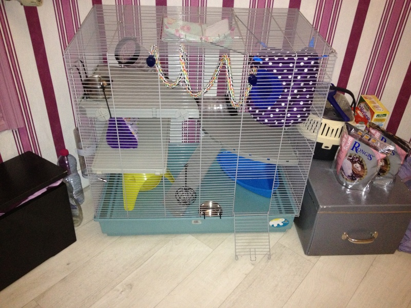 Ma nouvelle Cage  Img_1417