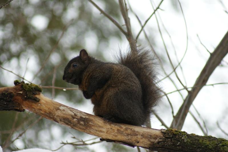 Un écureuil en attente!! Parc_d21