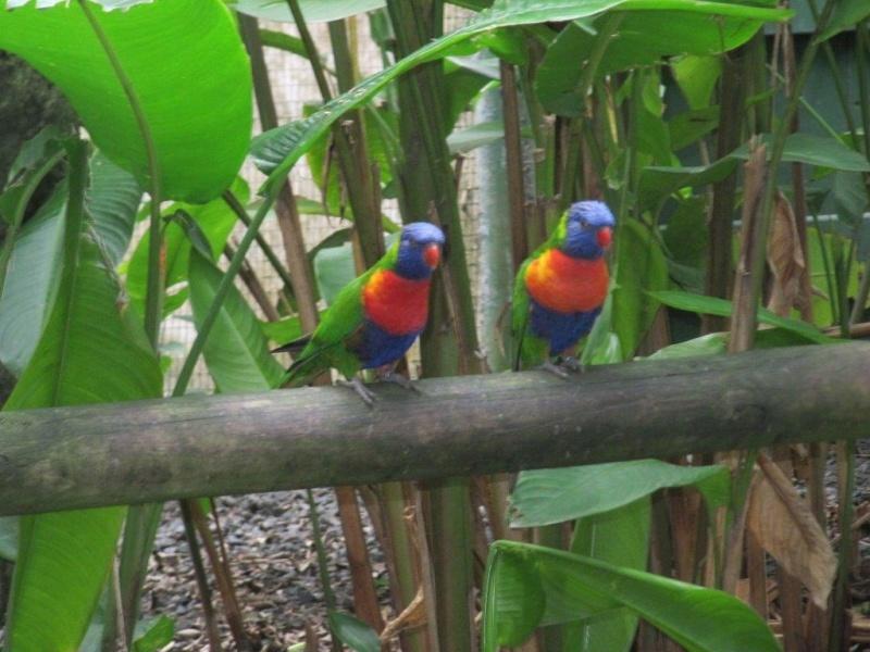 Quelques photos souvenir de Guadeloupe Img_0711