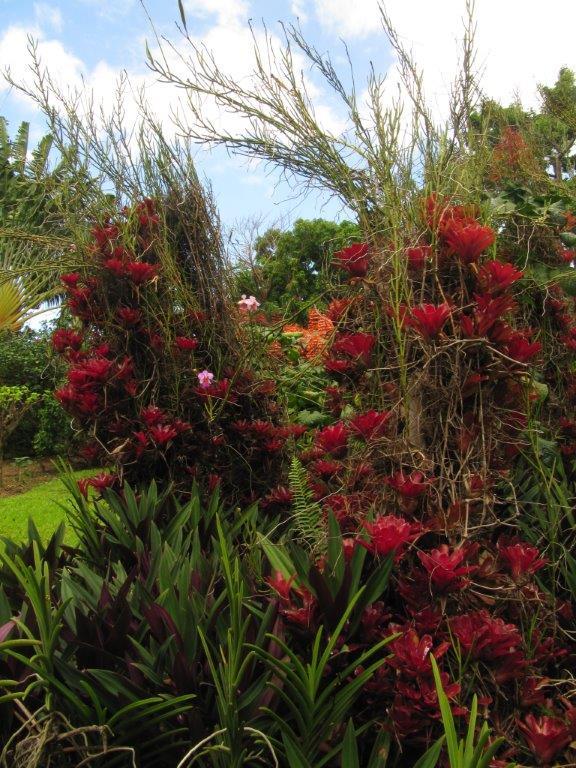 Quelques photos souvenir de Guadeloupe Img_0712