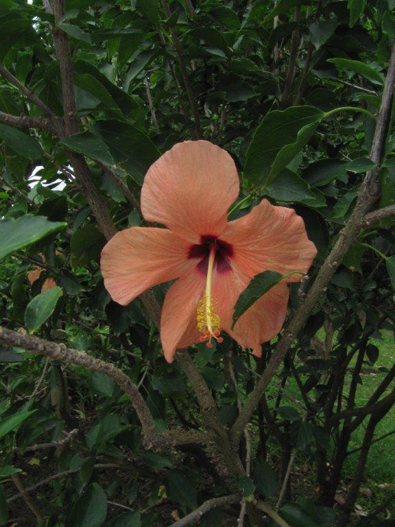Quelques photos souvenir de Guadeloupe Img_0714