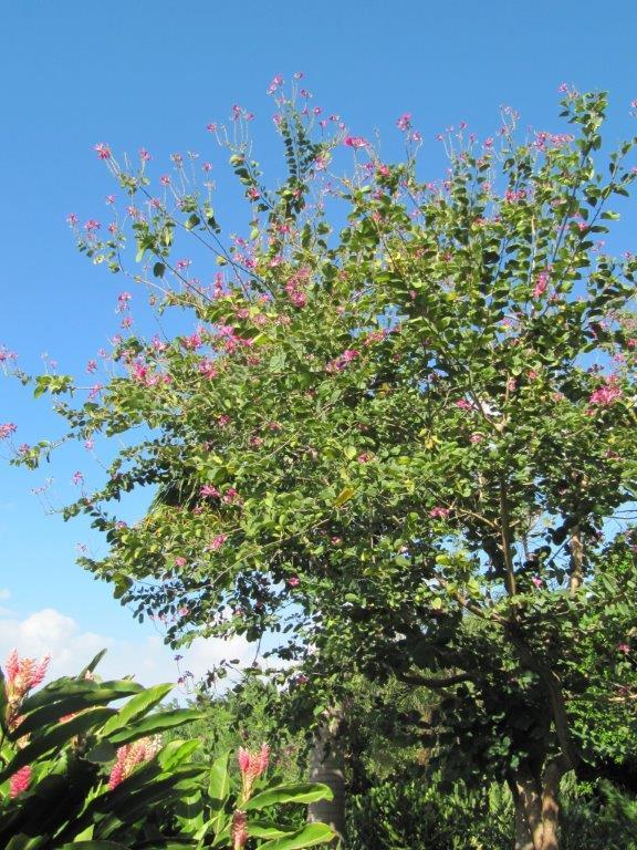 Quelques photos souvenir de Guadeloupe Img_0812