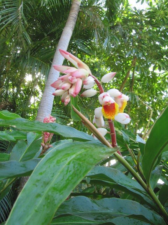 Quelques photos souvenir de Guadeloupe Img_0813