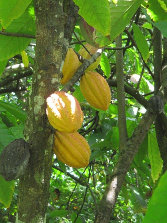 Quelques photos souvenir de Guadeloupe Img_0814