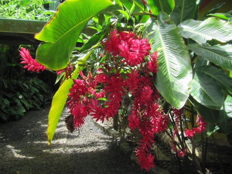 Quelques photos souvenir de Guadeloupe Img_0816