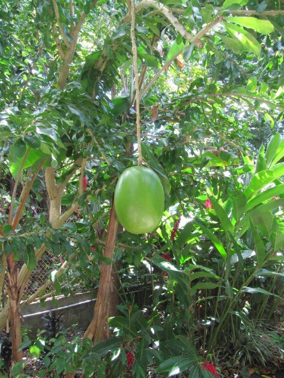 Quelques photos souvenir de Guadeloupe Img_0818