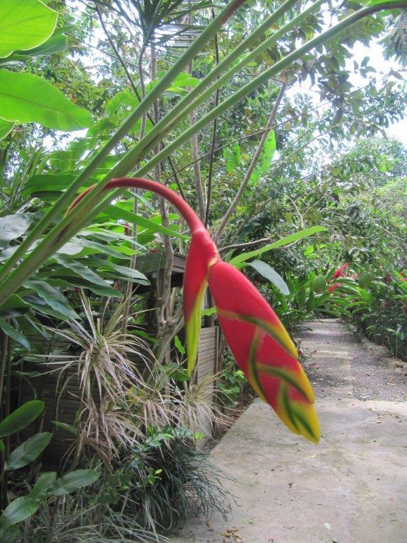 Quelques photos souvenir de Guadeloupe Img_0819
