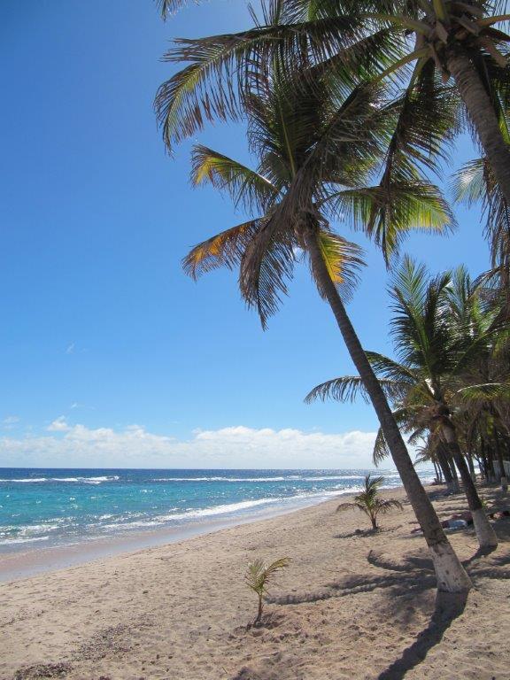 Quelques photos souvenir de Guadeloupe - Page 2 Img_0826