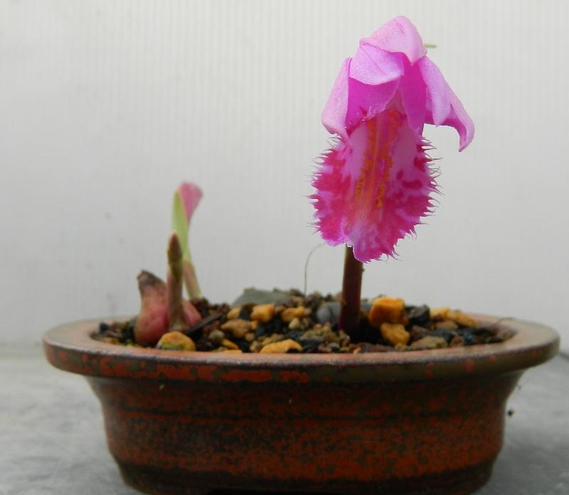 Mes Satsuki- Mes Fleurs - Page 3 Pleino10