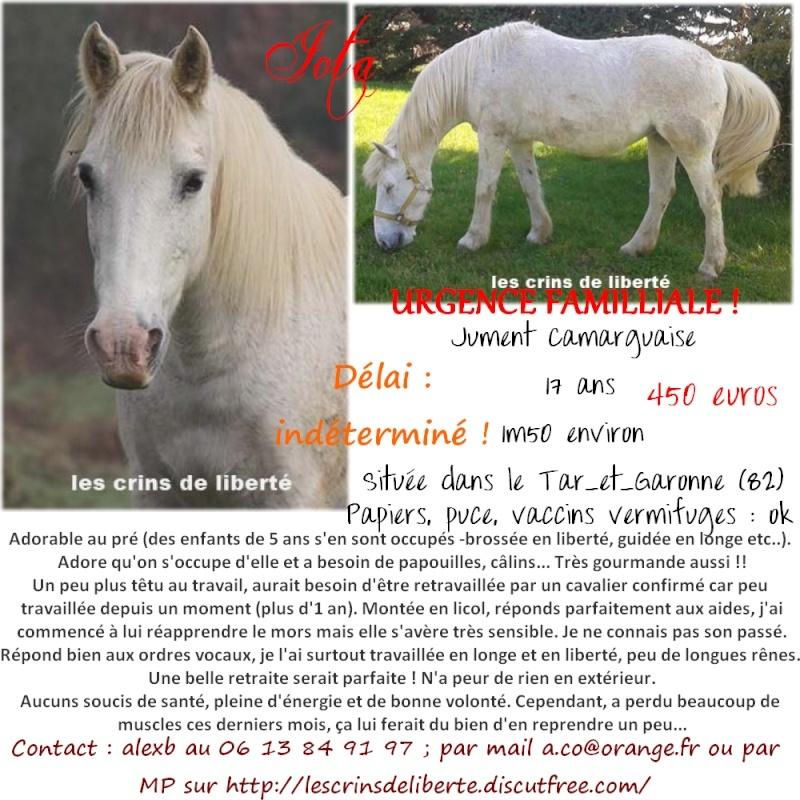(Dept 82) IOTA, camarguaise, Sauvée par Corinne09 (Aout 2014) - Page 13 Iota_a10