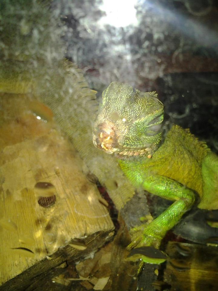 Pétitions en ligne Pour la fermeture de la jungle aux reptiles  Physi_11