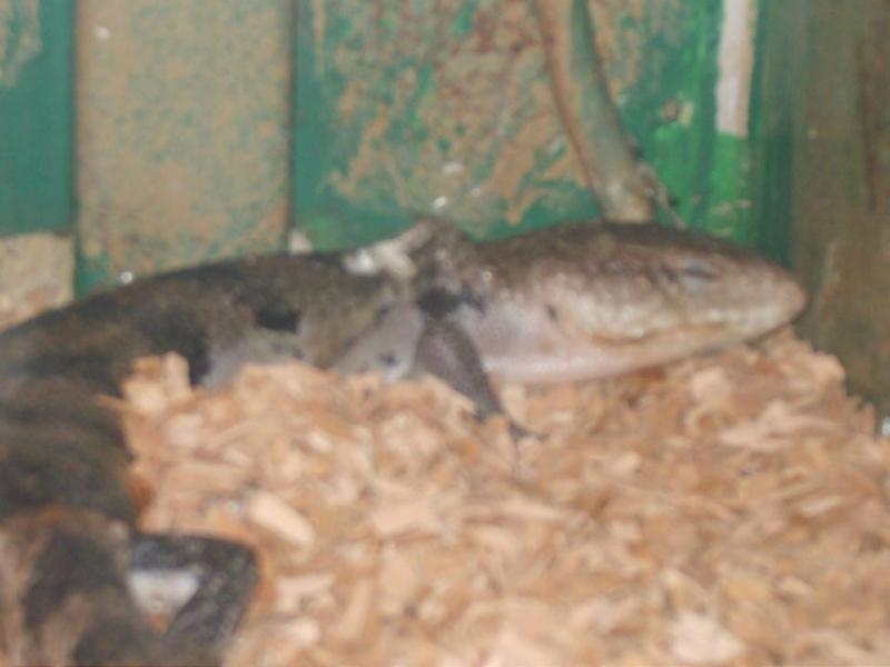 Pétitions en ligne Pour la fermeture de la jungle aux reptiles  Tilika11