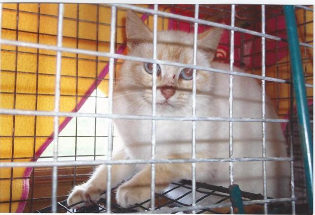 Photos des chats sauvés, avant/après Lally_10