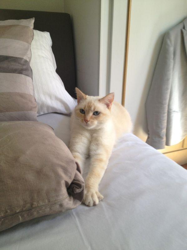 Photos des chats sauvés, avant/après Lally_11
