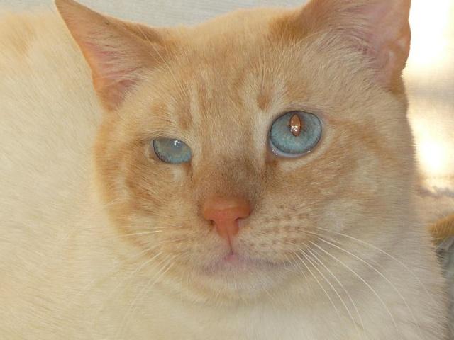Photos des chats sauvés, avant/après P1090210
