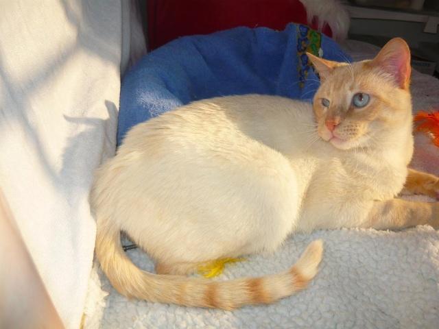 Photos des chats sauvés, avant/après P1090211