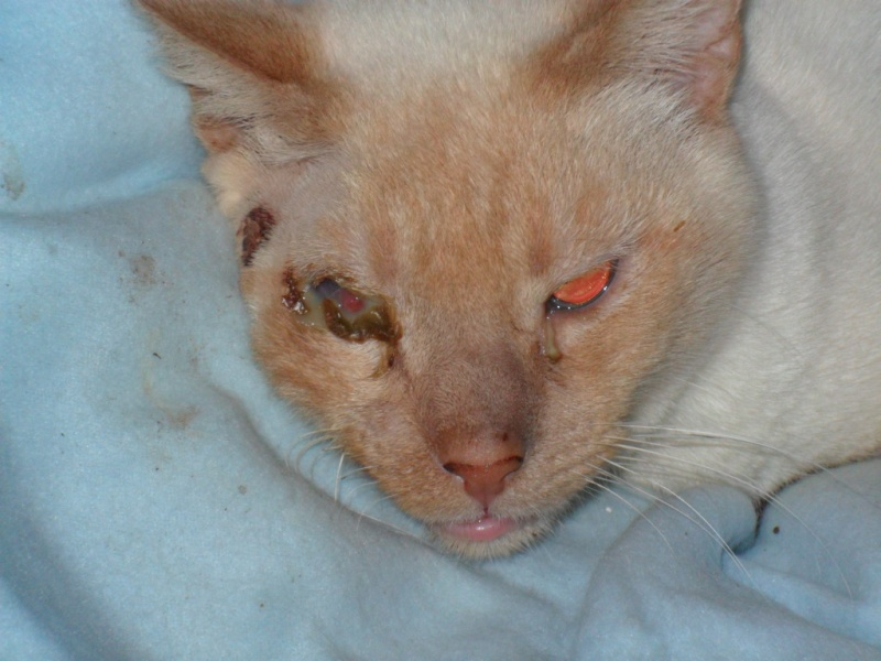 Photos des chats sauvés, avant/après Sam_0910