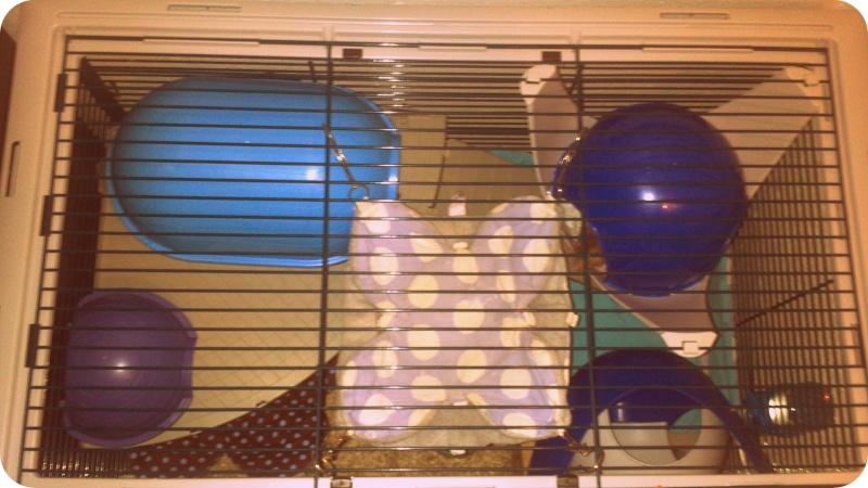 Photos de vos cages - Page 37 Dsc_0813