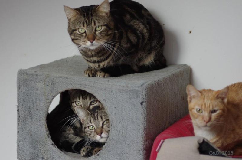Némo, Léo et Kent, 3 tigrés de Montpellier (34) 8-4zou10