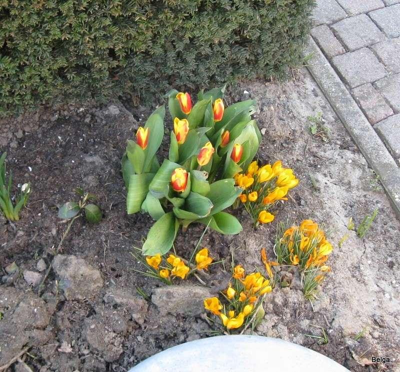 Erste Frühlingsboten im Garten und in Wald und Flur - Seite 5 Img_3322