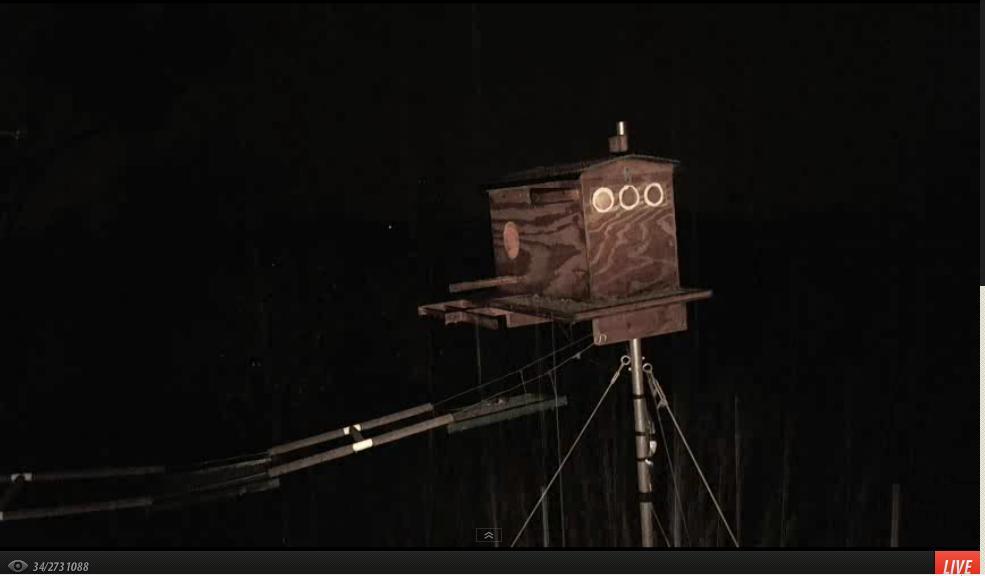 La webcam d'une chouette effraie  - Page 6 8_mars10