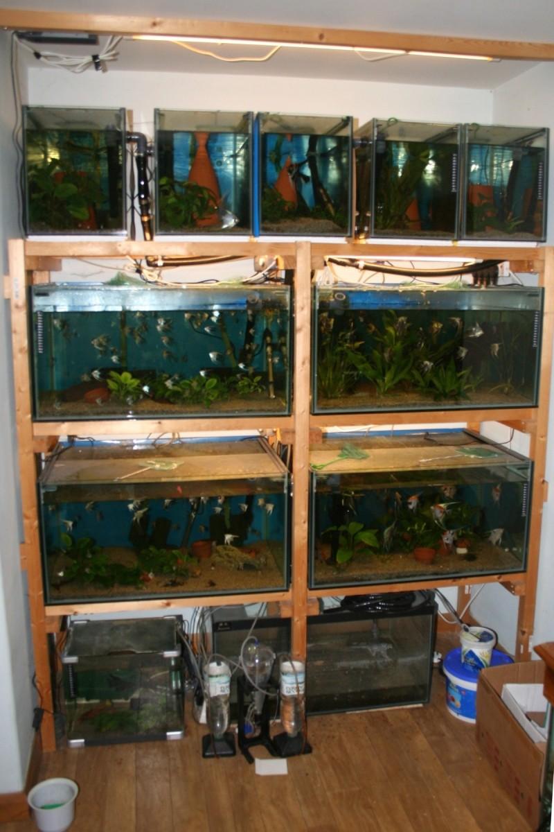 Robs fish room tales. Img_0710