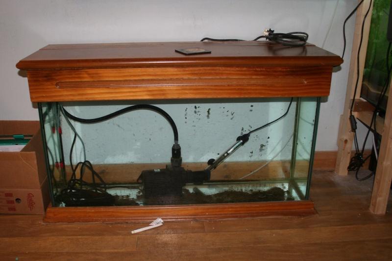 Robs fish room tales. Img_0711