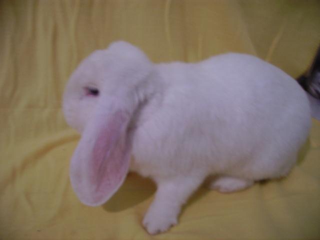 bunny toujours aussi foufou Pict3717