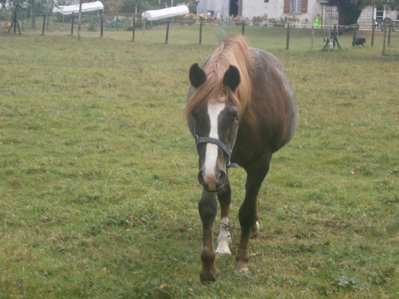 GITANE & CAPUCINE - nées en 1988 - accueillies en mars 2009 chez Pech-Petit  P9120011