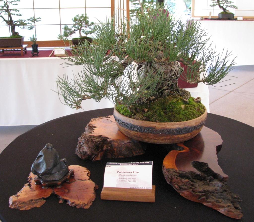 RMBS 2018 Rocky Mountain Bonsai and Stone Show Img_3110