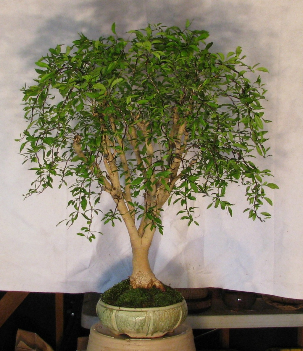 27 New Bonsai Pot Vendors added to my website. Img_4110