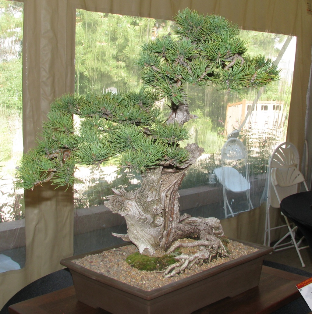 2019 Rocky Mountain Bonsai Society Show Report  Img_5610