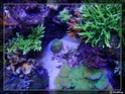 nécrose des coraux P8291311