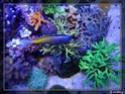 nécrose des coraux P8291312