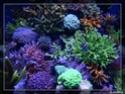 nécrose des coraux P8291313
