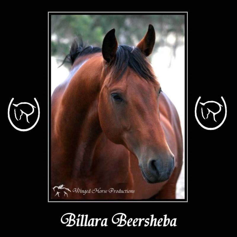 Billara Beersheba Billar10