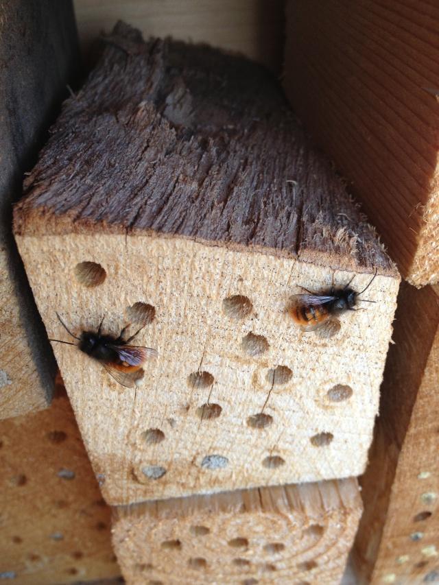 Un hôtel à abeilles sauvages - Page 2 Img_2910