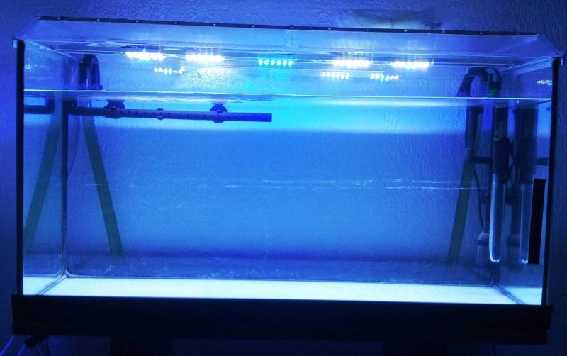 """Vrai test sur """"Eclairage LED lumivie pour bacs plantés"""" - Page 10 Img_2011"""