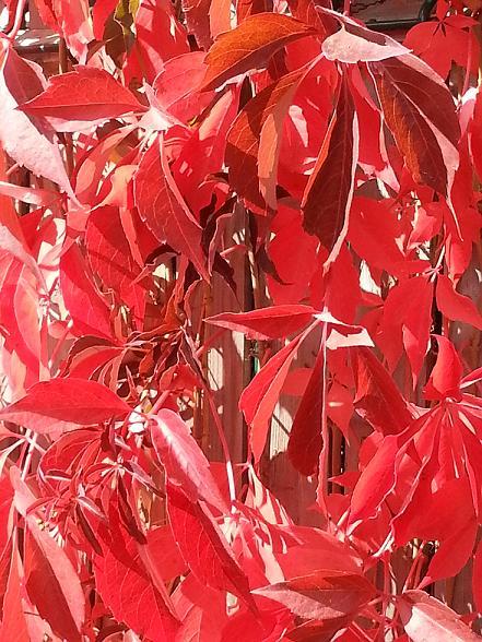34 - La couleur rouge !!! - Page 2 20121010
