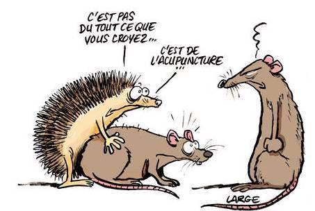 FAIT COMME UN RAT  Att00012