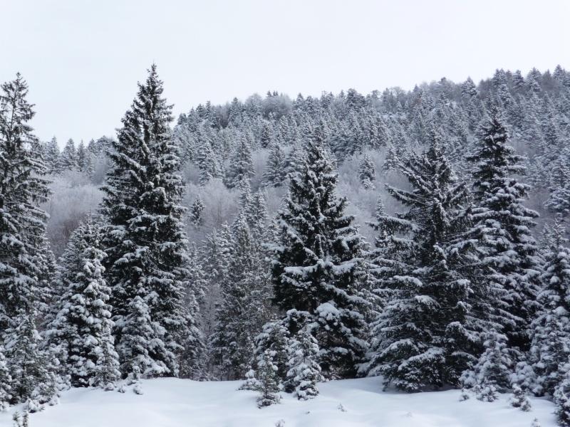 Raid invernale al bivacco Campilussi – Altopiano di Asiago P1080216