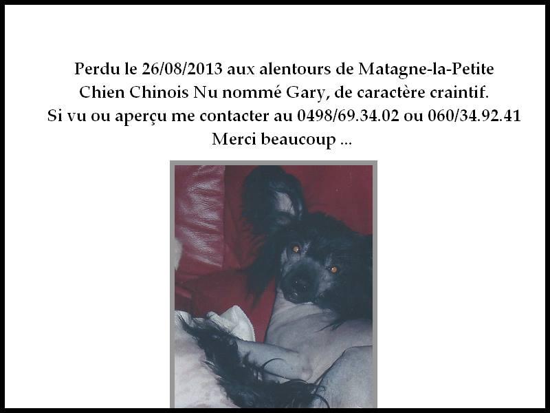 Petit chien perdu . 12360910