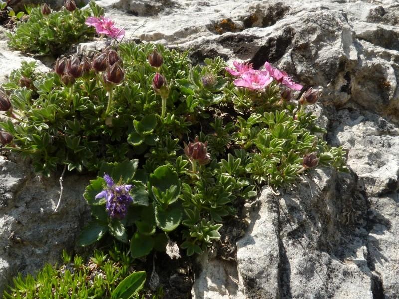 Du 13 au 19 juillet dans le Val di Fassa P1490514