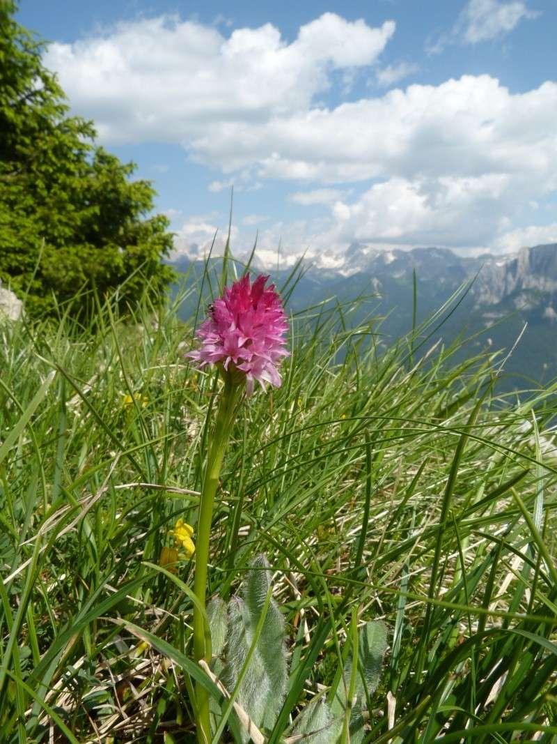 Du 13 au 19 juillet dans le Val di Fassa P1490710