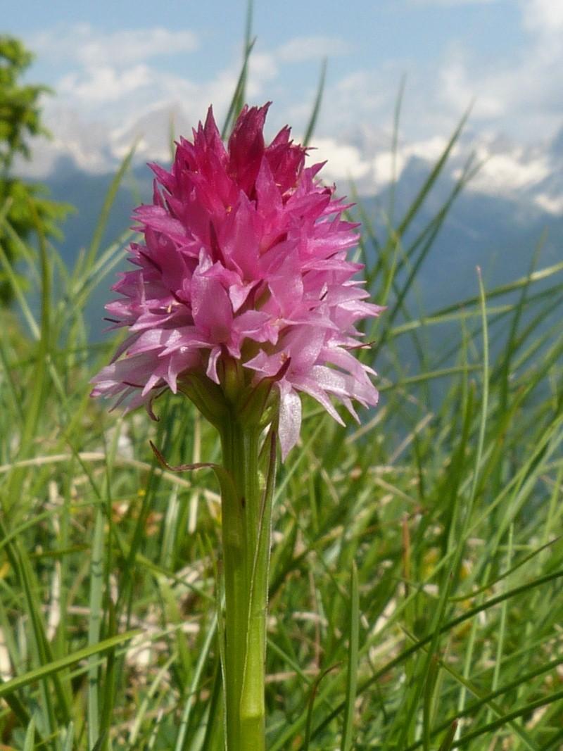 Du 13 au 19 juillet dans le Val di Fassa P1490711