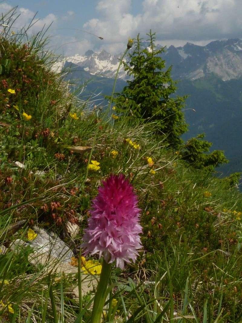 Du 13 au 19 juillet dans le Val di Fassa P1490712