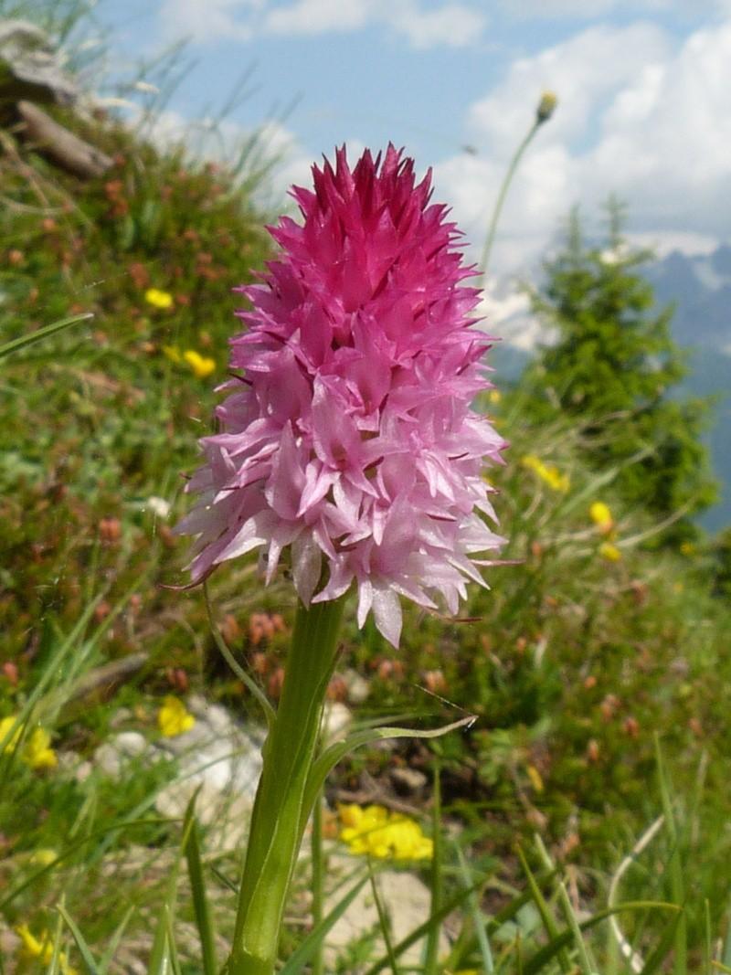 Du 13 au 19 juillet dans le Val di Fassa P1490713
