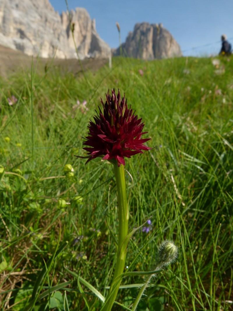 Du 13 au 19 juillet dans le Val di Fassa P1490810