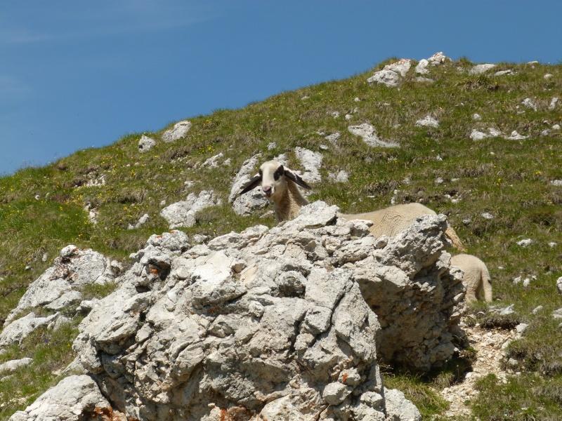 Du 13 au 19 juillet dans le Val di Fassa P1490910