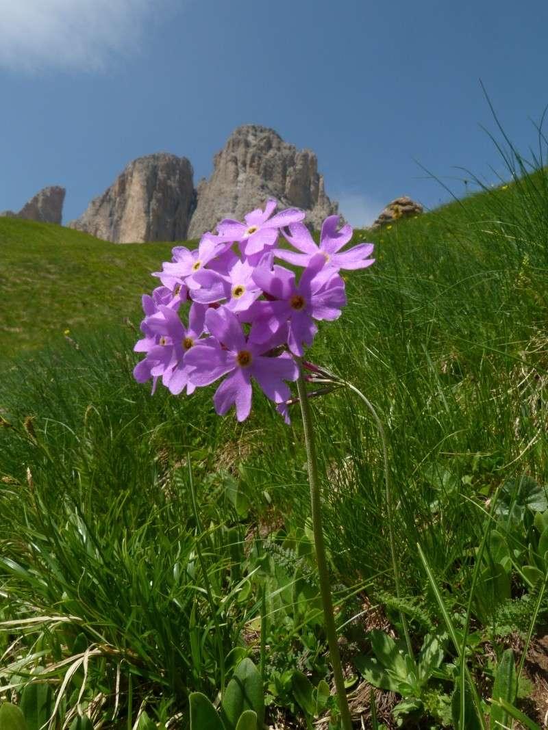 Du 13 au 19 juillet dans le Val di Fassa P1500110